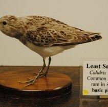 Image of 2184 - Birds