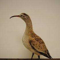 Image of 2205 - Birds