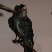 Image of 2332 - Birds