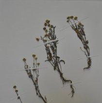 Image of H4466 - Botany