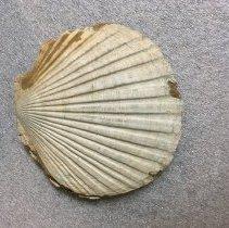 Image of 4996 - Paleontology