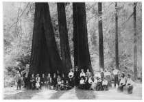 Image of Cathedral Grove, Muir Woods,1915