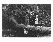 Image of John Muir and friends in Muir Woods, 1909