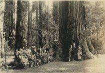 Image of Group of people in Muir Woods, 1924