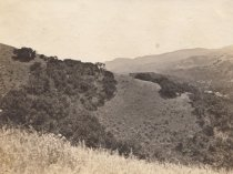 Image of Mill Valley, circa 1915?
