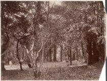 Image of Sunnyside Lots, circa 1902                                                                                                                                                                                                                                     - Print, Photographic