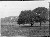Image of Sunnyside Tract before development, circa 1902                                                                                                                                                                                                                 - Print, Photographic