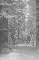 Image of John Finn & Eva Ann Chamberlain Finn, date unknown                                                                                                                                                                                                         - Print, Photographic