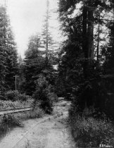 Image of Mountain railroad tracks going up  Blithedale Canyon, date unknown                                                                                                                                                                                         - Print, Photographic