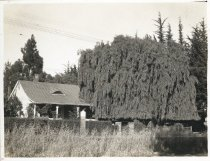 Image of 217 Miller Avenue, late 1930s                                                                                                                                                                                                                            - Print, Photographic