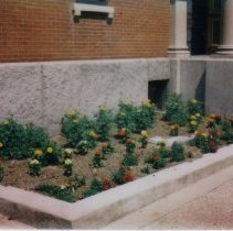 Image of Library garden