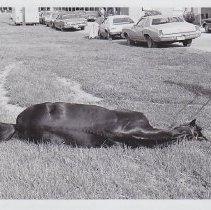 Image of 1986.069.0067 - Print, Photographic
