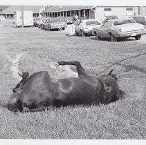 Image of 1986.069.0069 - Print, Photographic
