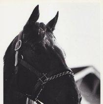 Image of 1986.069.0109 - Print, Photographic
