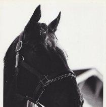 Image of 1986.069.0110 - Print, Photographic