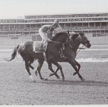 Image of Nostalgia on  track with jockey up, 1986.69.356B