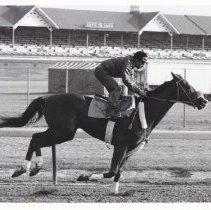 Image of Screen King, 1986.69.435B
