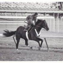 Image of Sir Ivor Again, 1986.69.468B