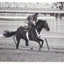 Image of Sir Ivor Again, 1986.69.468C