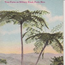 """Image of Geil - Blank Postcard: Tree Ferns on Military Road, Porto Rico  back: """"make a colored slide""""  note: located in folder: Unused Postcards"""