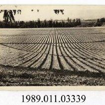 Image of 1989.011.03339 - Postcard, real photo