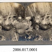 Image of 2006.017.0001 - Stereoview