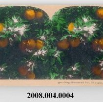 Image of 2008.004.0004 - Stereoview