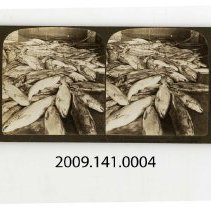 Image of 2009.141.0004 - Stereoview