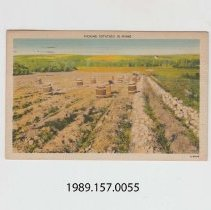 Image of 1989.157.0055 - Picking Potatoes in Maine