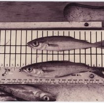 Image of LB2012.15.1266 - National Fisherman Collection