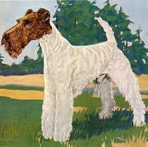 Image of Andel's Kennels Postcard - This item is a postcard of a Wire Haired Fox Terrier from Andel's Kennels of Oak Lawn located at 9211 83rd Avenue.  Although the business listed themselves at an Oak Lawn address, it was actually located outside of the village.