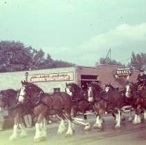 Image of The Wilson & Company's float in the Round-Up Parade. 