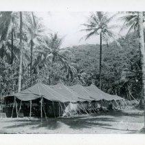 Image of World War II Photograph - This is a photograph taken in the Pacific Theater during the Second World War. It features a large military tent surrounded by palm trees, and may have been snapped in the Philippine Islands.