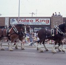 Image of 1983 Oak Lawn Fest Parade - This item is a slide of the 1983 Oak Lawn Fest Parade.  It features a team of horses pulling a Budweiser Wagon down 95th Street.  Swell Elegante Gifts of Distinction, The Video King, and Rupich's Drugs are visible in the background.