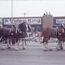 Image of 1983 Oak Lawn Fest Parade - This item is a slide of the 1983 Oak Lawn Fest Parade.  It features a team of horses pulling a Budweiser Wagon down 95th Street.  The Video King and Rupich's Drugs are visible in the background.
