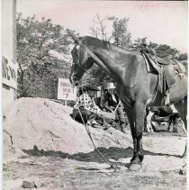 Image of Round-Up Days, 1953 - This is a photograph of the 1953 Oak Lawn Round-Up Days celebration. It features a horse standing near two unidentified men panning for gold at one of the mines set up as entertainment during the celebration. Cash and merchandise certificates were hidden in the mine for people to find. A stagecoach and horse are partially visible in the background. Held from 1949-1958, the Round-Up was a western themed celebration that included a parade, rides, and other events.
