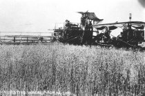 Image of Agriculture; Crops, other - Print, Photographic