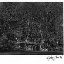 Image of LLoyd Harbor Pond, Frame #11