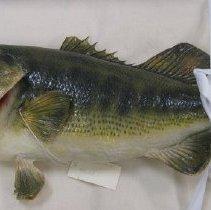 Image of 1988.022.0001 - Fish