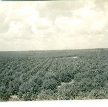 Image of 1990.136.0044 - Print, Photographic
