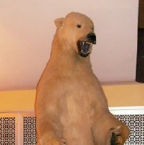 Image of 1994.134.0001 - Bear, Polar