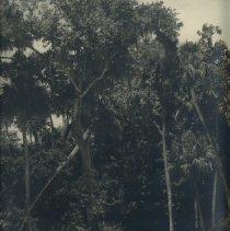 Image of 1997.103.0004 - Print, Photographic