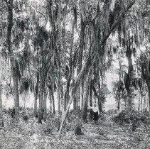 Image of 2002.022.0005 - Print, Photographic