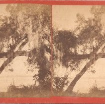 Image of 2007.001.0067 - Stereoview