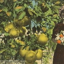Image of 2011.042.0008 - Postcard