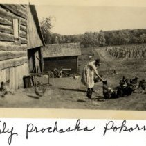 Image of Print, Photographic - Emily Prochaska Pokorny feeding chickens