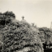 Image of Stack threshing