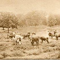 Image of Postcard - Agricultural scene-Postcard
