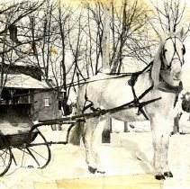 Image of Postcard - White horse hitched to sleigh-postcard
