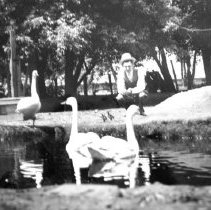 Image of Print, Photographic - Lyle Schoeneman feeding trumpeter swans & waterfowl